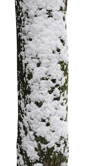 Troncos de árvores com neve isolados no fundo branco
