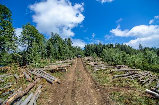 Troncos de árvores cortadas frescas ficam ao lado de uma estrada de terra na floresta, prontos para o transporte.