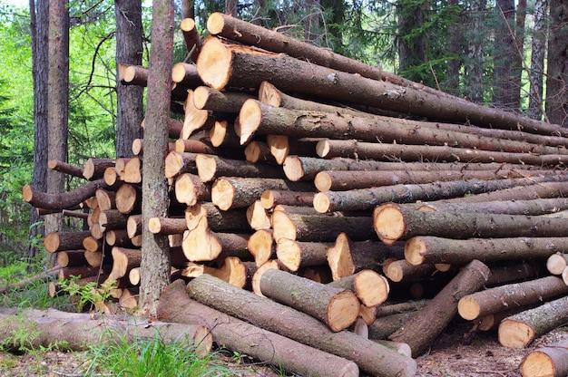 Troncos de árvores derrubados, galhos descascados
