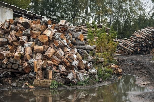 Troncos de árvores florestais derrubados pela indústria madeireira