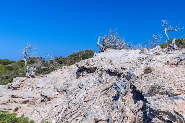 Troncos de árvores secas pelo sol à beira-mar