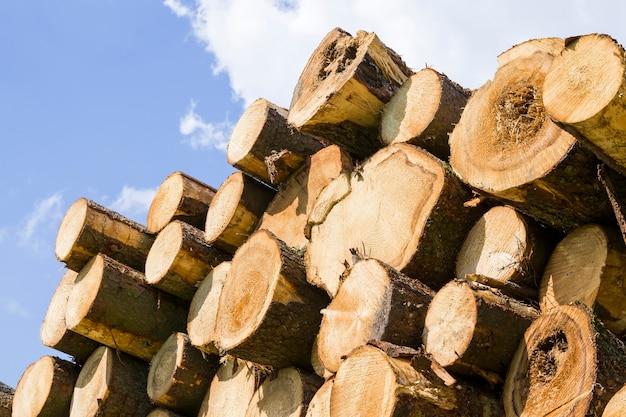 Troncos de madeira de pinho natural durante a extração de madeira para processamento de madeira na produção florestal
