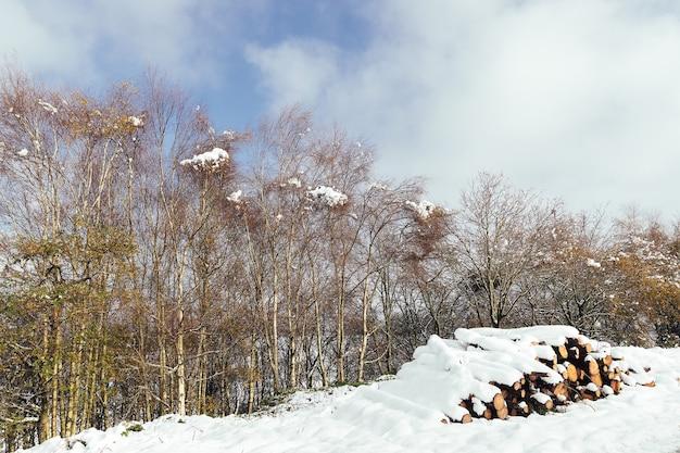Troncos de madeira empilhados e cobertos de neve na pilha de madeira de pinheiro da floresta cortada após uma nevasca de inverno