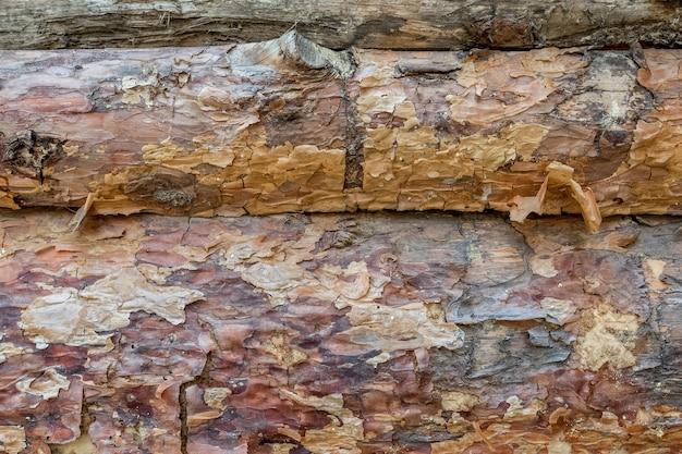 Troncos de pinheiro envelhecidos com casca descascada como pano de fundo natural