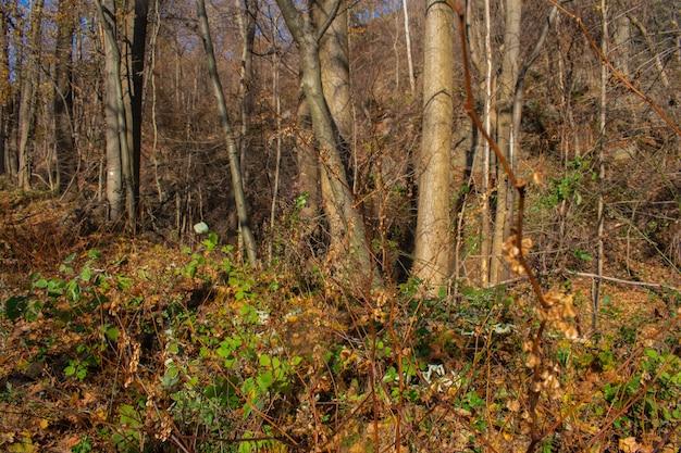 Troncos no meio de uma floresta