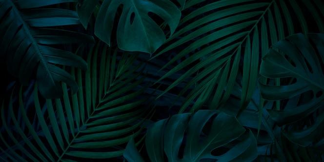 tropical deixa fundo com espaço de cópia