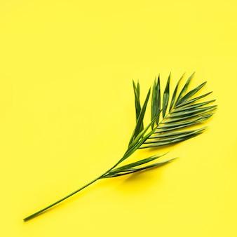 Tropical padrão de folha de palmeiras em amarelo. vista do topo. verão.
