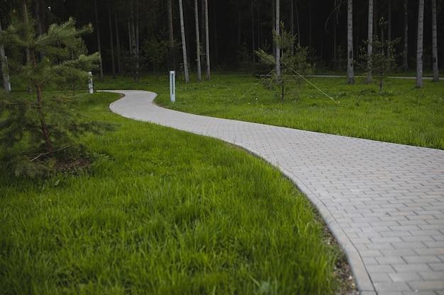 Trópico de tijolos cinza em todo o gramado verde na floresta à noite