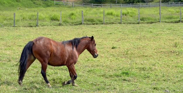 Trote de cavalo no pasto