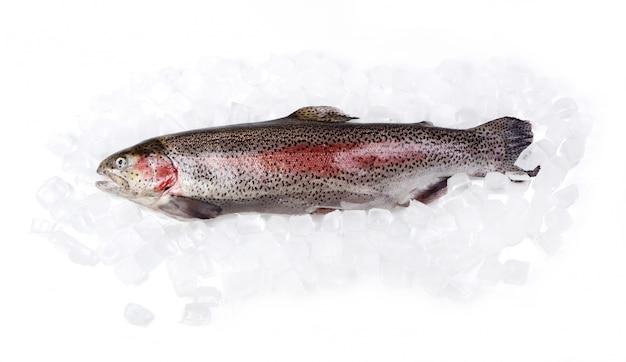 Truta fresca no gelo isolado no branco