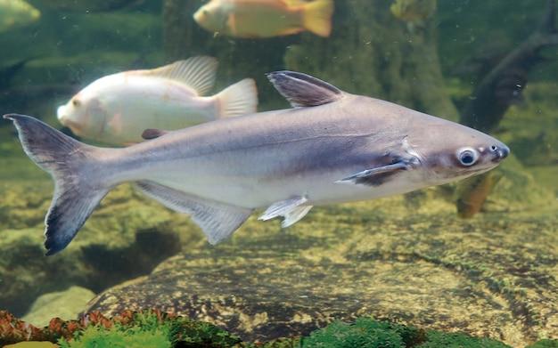 Tubarão iridescente nadando na lagoa