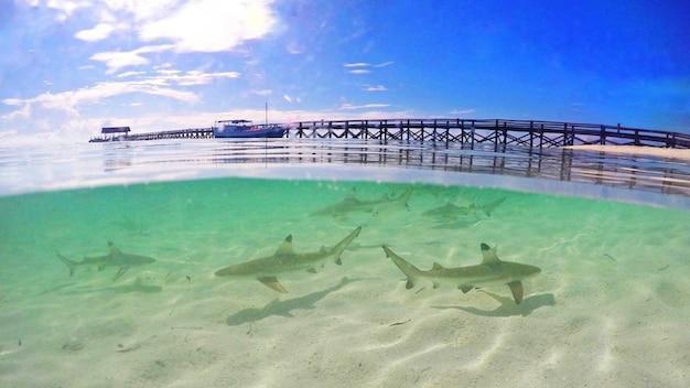 Tubarões na praia