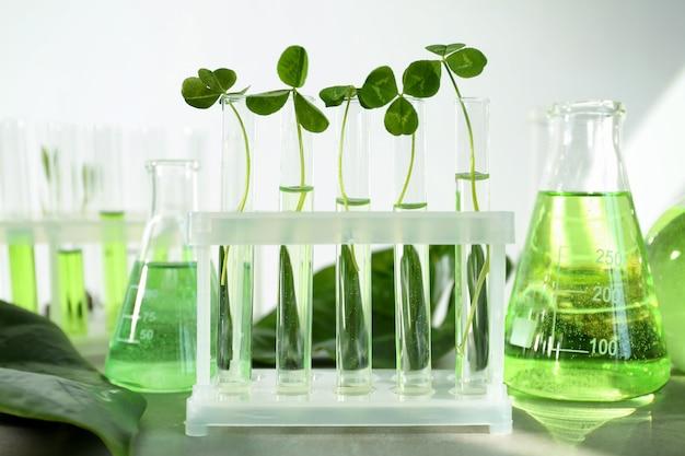 Tubos de ensaio com plantas no suporte na mesa