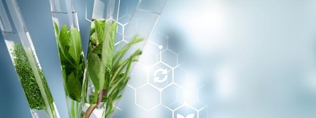Tubos de ensaio com plantas no suporte no fundo desfocado