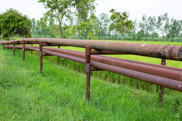 Tubos longos de aço em campos de arroz em poços de petróleo bruto.