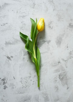 Tulipa amarela de vista superior na mesa
