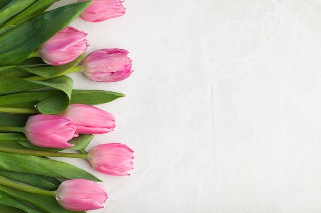 Tulipa cor-de-rosa no fundo branco.