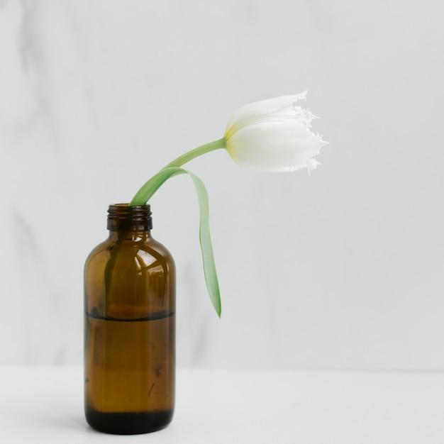 Tulipa papagaio branco em um frasco de vidro marrom