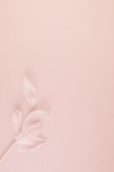 Tulipa rosa com pétalas no fundo rosa