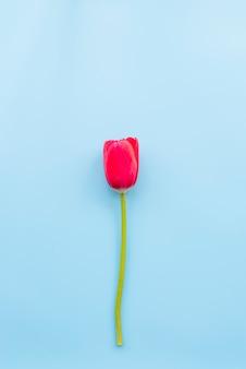 Tulipa vermelha brilhante com haste cortada
