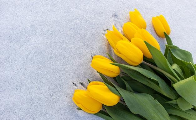Tulipas amarelas com folhas verdes em um fundo branco de neve natural