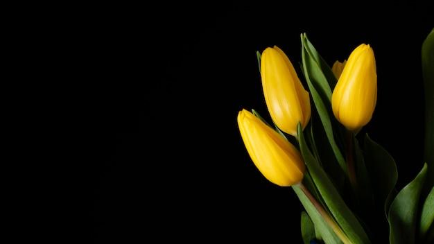 Tulipas amarelas de cópia-espaço