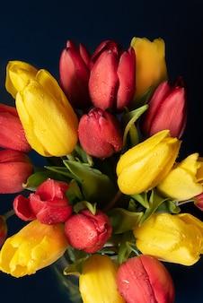 Tulipas amarelas e vermelhas com gotas de orvalho em um fundo escuro