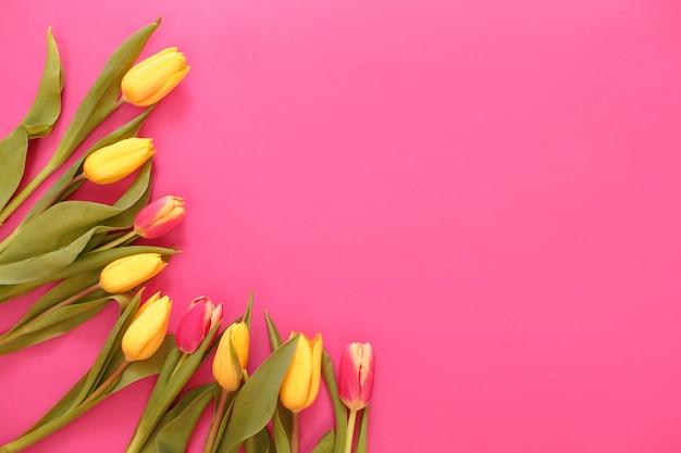 Tulipas amarelas são dispostas em um fundo rosa, o lugar para a inscrição é uma vista de cima.