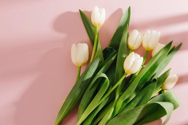 Tulipas brancas em fundo rosa pálido com a luz do sol da manhã. composições elegantes em tons pastel.