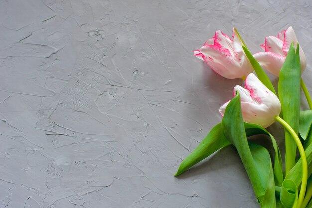Tulipas coloridas da primavera e flores de íris em fundo cinza