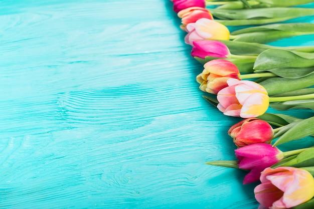 Tulipas coloridas em linha