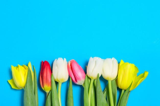 Tulipas coloridas flores em uma fileira no fundo azul