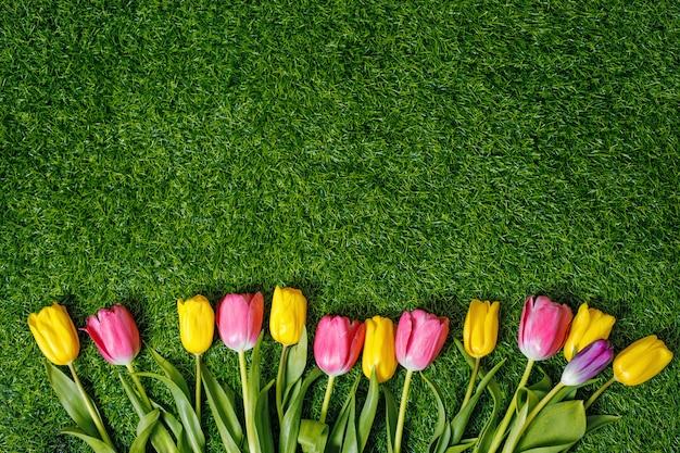 Tulipas coloridas na grama verde do parque.