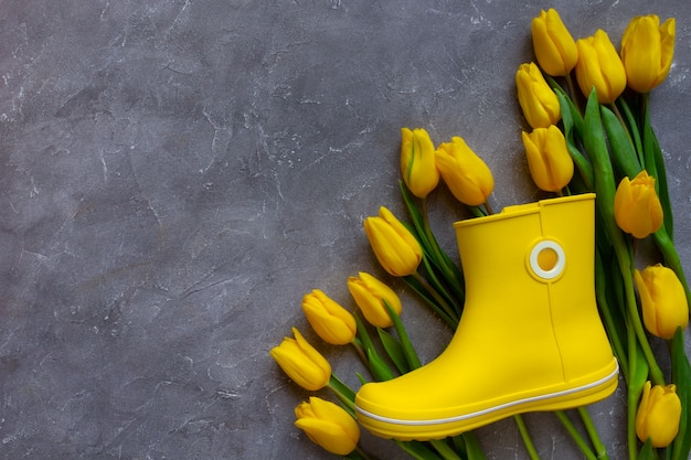 Tulipas com flores amarelas da primavera e bota de borracha amarela em cinza
