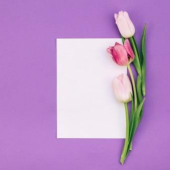 Tulipas com papel branco em branco sobre fundo roxo