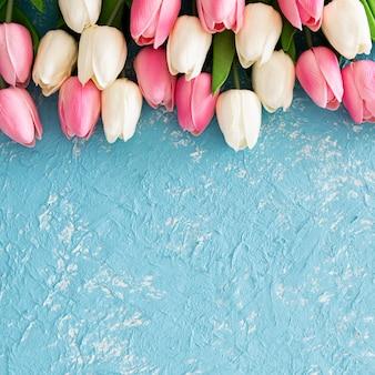 Tulipas cor de rosa e brancas na textura azul clara do grunge