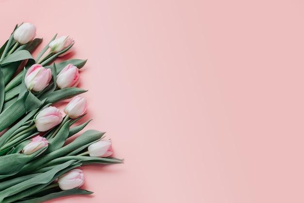 Tulipas cor de rosa em fundo rosa, cartão do dia da mulher e dia das mães