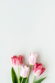 Tulipas cor de rosa em modelo de fundo branco em branco