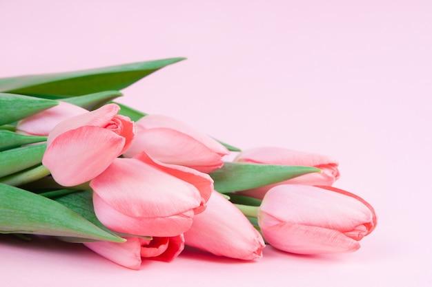 Tulipas cor de rosa em um espaço de cópia de fundo rosa