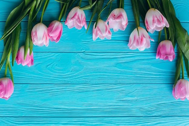 Tulipas cor-de-rosa em um fundo azul de madeira. vista superior e dupla plana.
