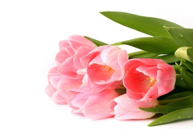 Tulipas cor de rosa isoladas no fundo branco primavera verão dia das mães