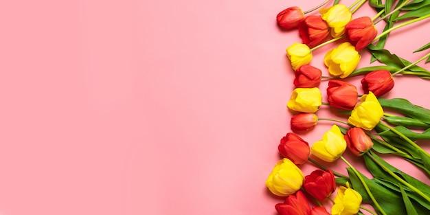 Tulipas de cor sobre um fundo rosa. flat leigo, vista de cima. plano de fundo dia dos namorados.