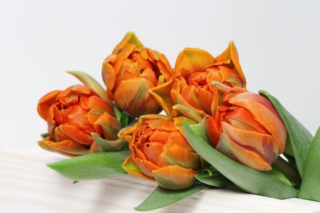 Tulipas de flores naturais de cor laranja