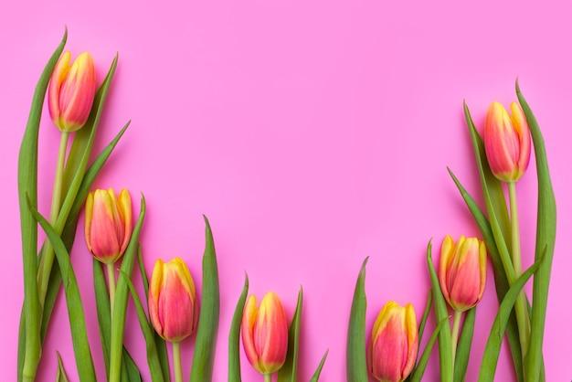 Tulipas de flores naturais frescas no espaço da cópia de fundo rosa. lindas flores da primavera