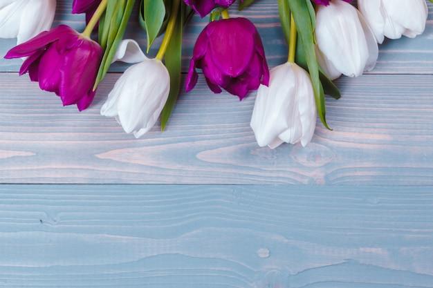 Tulipas em madeira azul. flor da primavera.