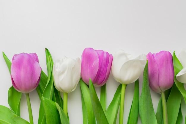 Tulipas florescendo brancas e roxas em um fundo floral