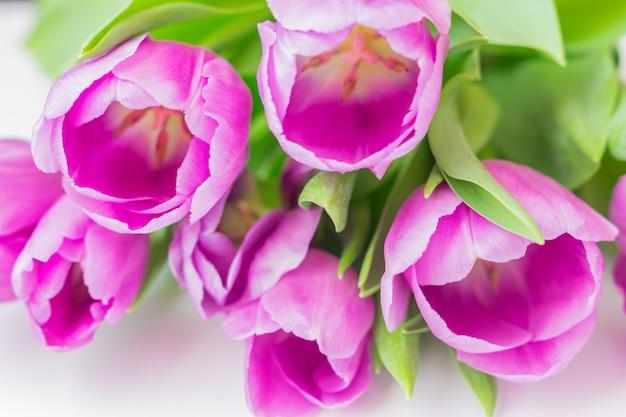 Tulipas florescendo brancas e roxas. fundo floral