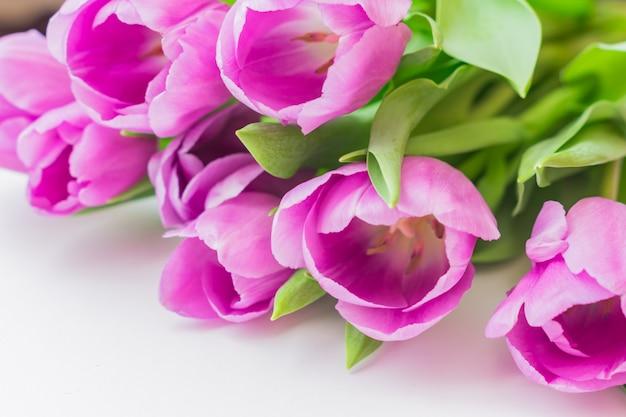 Tulipas florescendo brancas e roxas