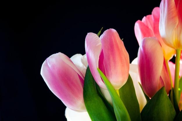 Tulipas holandesas varietais brancas e rosa em um close de buquê em um fundo preto