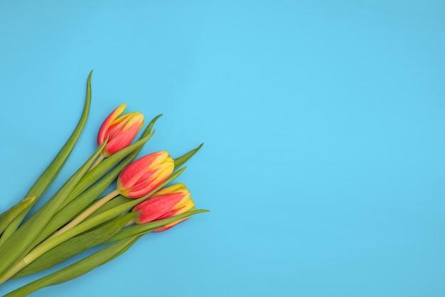 Tulipas no espaço da cópia de fundo azul claro. flores frescas da primavera